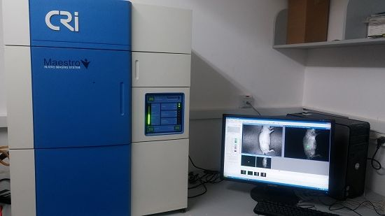 In Vivo Imaging